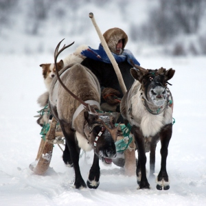 Sami reindeer herdsman, photo by S.Konyaev
