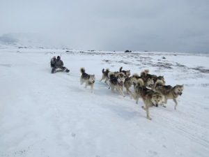 Dog sledge fly-by!