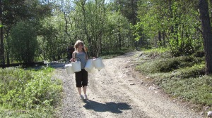 Research assistant Heini Koivuniemi is carrying the hand reared autumnal moth larvae in the buckets.