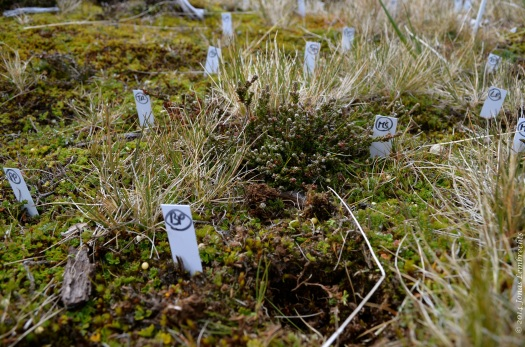 Plots with plant labels in tundra