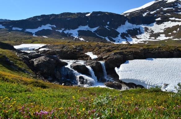 Alpine vegetation in Sweden