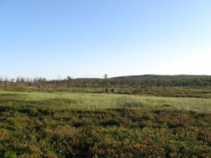 Plots in Pulmankijarvi-jaggi
