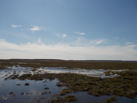 Nymto Park Peatlands