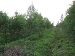 Arboretum 2 at Skallovaara