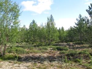 Arboretum 3 at Syysjoki
