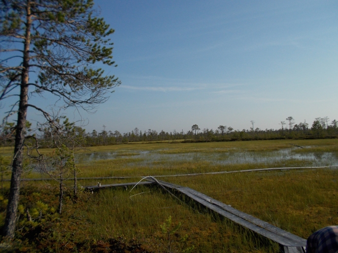 Looking at the bog and boardwalk