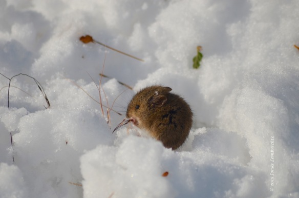A little mouse that did not seem to mind the extreme circumstances